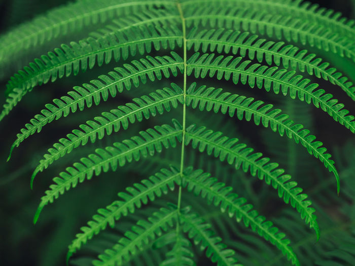 High Angle View Of Fern In Forest