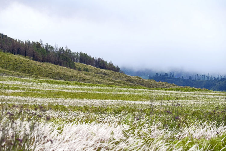 Beautiful savanna around mount bromo Environment Landscape Grass Sky Beauty In Nature Land Nature Tranquility Mountain Cloud - Sky Outdoors Scenics - Nature Plant Field Tree Non-urban Scene Tranquil Scene Mountbromo Java ASIA Indonesia_photography Landscape_photography Holiday Savanna Travel Destinations