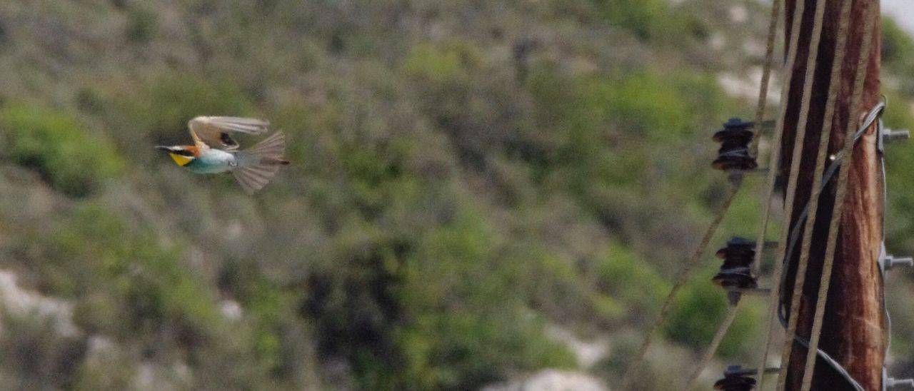 bird, animal themes, animals in the wild, one animal, flying, spread wings, animal wildlife, day, mid-air, outdoors, nature, no people, beauty in nature, close-up, tree, bird of prey