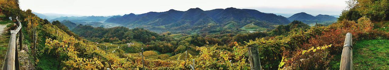 Mountain Range Landscape Nature Lush Foliage Beauty In Nature Tree Outdoors Mountain Peak Lush - Description Health Spa Wineyard Panoramic View Autumn Proseccohills Proseccosuperiore