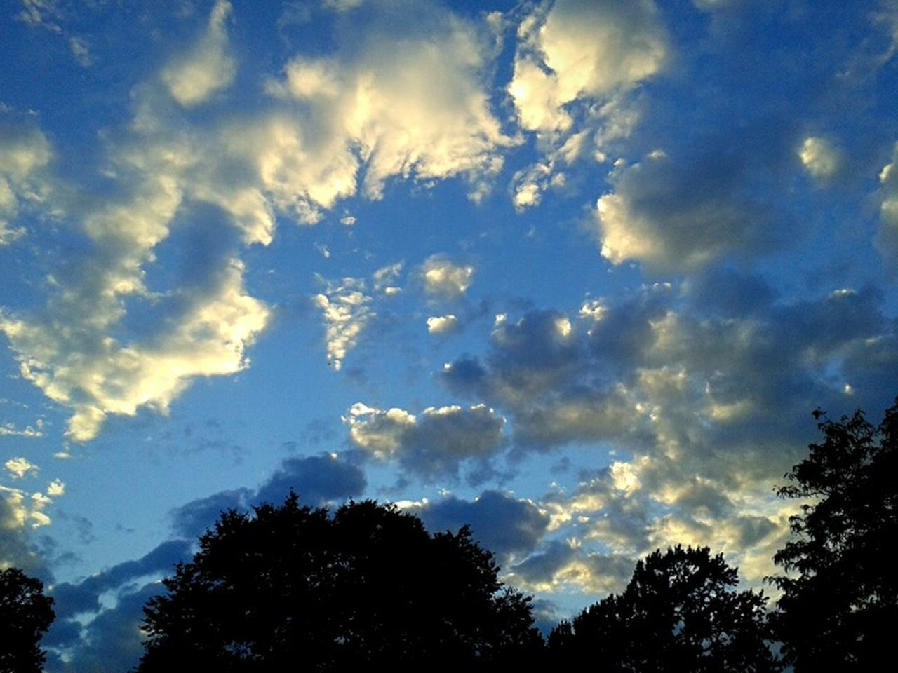 low angle view, beauty in nature, tree, nature, sky, silhouette, cloud - sky, scenics, no people, tranquility, tranquil scene, majestic, outdoors, day, growth