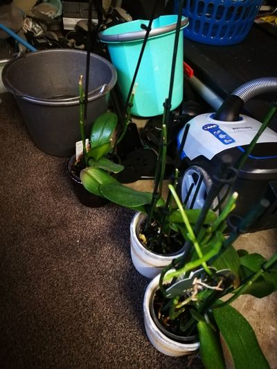 the ladies had their weekly bath EyeEm Best Shots EyeEm Nature Lover Eye Em FAB Orchid Water Caretaker Nature Flower