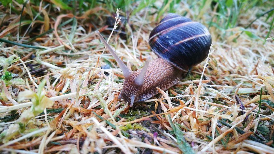 Slug Field