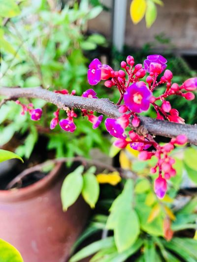 Plant Flowering Plant Flower Growth Freshness Beauty In Nature Pink Color Fragility Close-up Day Nature Vulnerability  Plant Part No People Focus On Foreground Flower Head Selective Focus