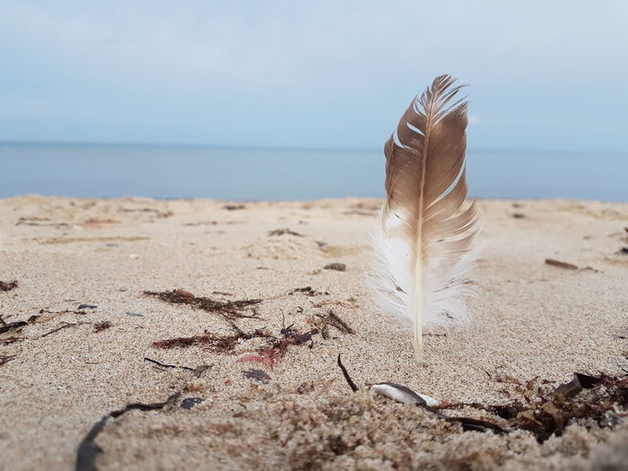 feather at the beach Feather  White Brown Blue Beach Life Relax EyeEm Selects Water Sea Beach Sand Dune Sand Sea Life Sky Horizon Over Water Close-up Wave Seascape Ocean Surfer Coast Coastline EyeEmNewHere Summer In The City My Best Travel Photo A New Beginning 50 Ways Of Seeing: Gratitude Holiday Moments My Best Photo #NotYourCliche Love Letter