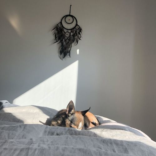 Dog sleeping on bed against dreamcatcher hanging on wall