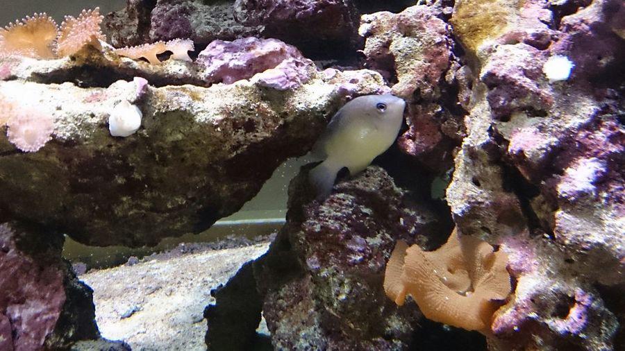 UnderSea Sea Life Water Swimming Underwater Sea Fish Coral Close-up Tropical Fish Clown Fish