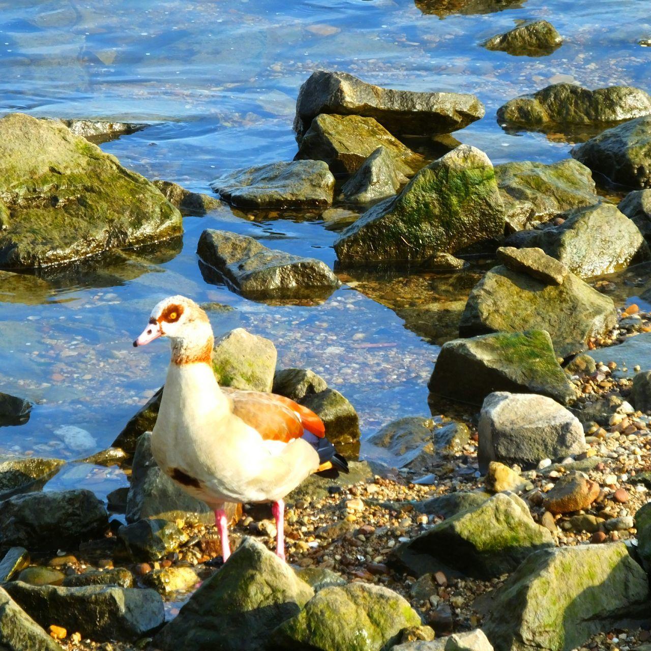 View Of Bird Perching At Coast
