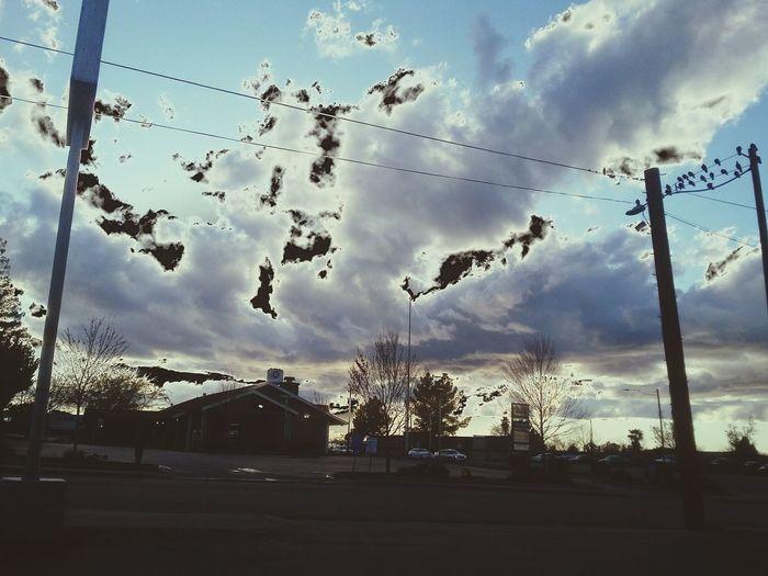 NewEyeEmPhotograph Outdoors Sun Bird Flying Tree Mid-air Flock Of Birds Silhouette Sky Animal Themes Cloud - Sky