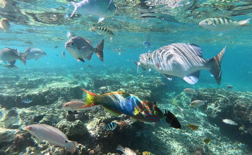 Flock of fish in sea