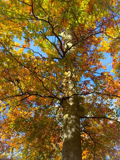 Low Angle View Tree Directly Below Branch Multi Colored Vibrant Color Leaf Leaves Yellow Autumn Autumn Colors Non-urban Scene Environment Scenics Beauty In Nature No People Tranquility Nature Autumn 2016