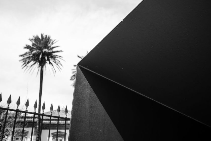 palm & metal Architecture Blackandwhite Building Exterior Built Structure Close-up Day Hikinggalicia Low Angle View Monochrome No People Outdoors Palm Palm Tree Protection Sky