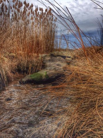 January EyeEm Nature Lover IPhone Photography Water_collection Hdr_Collection Seaside EyeEm Best Edits On A Hike
