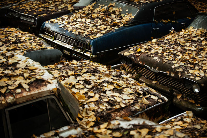 Cars waiting to (leaf). Abundance Autumn Cars Fall Fallen Fallen Leaves Leafs Nature Old Outdoors