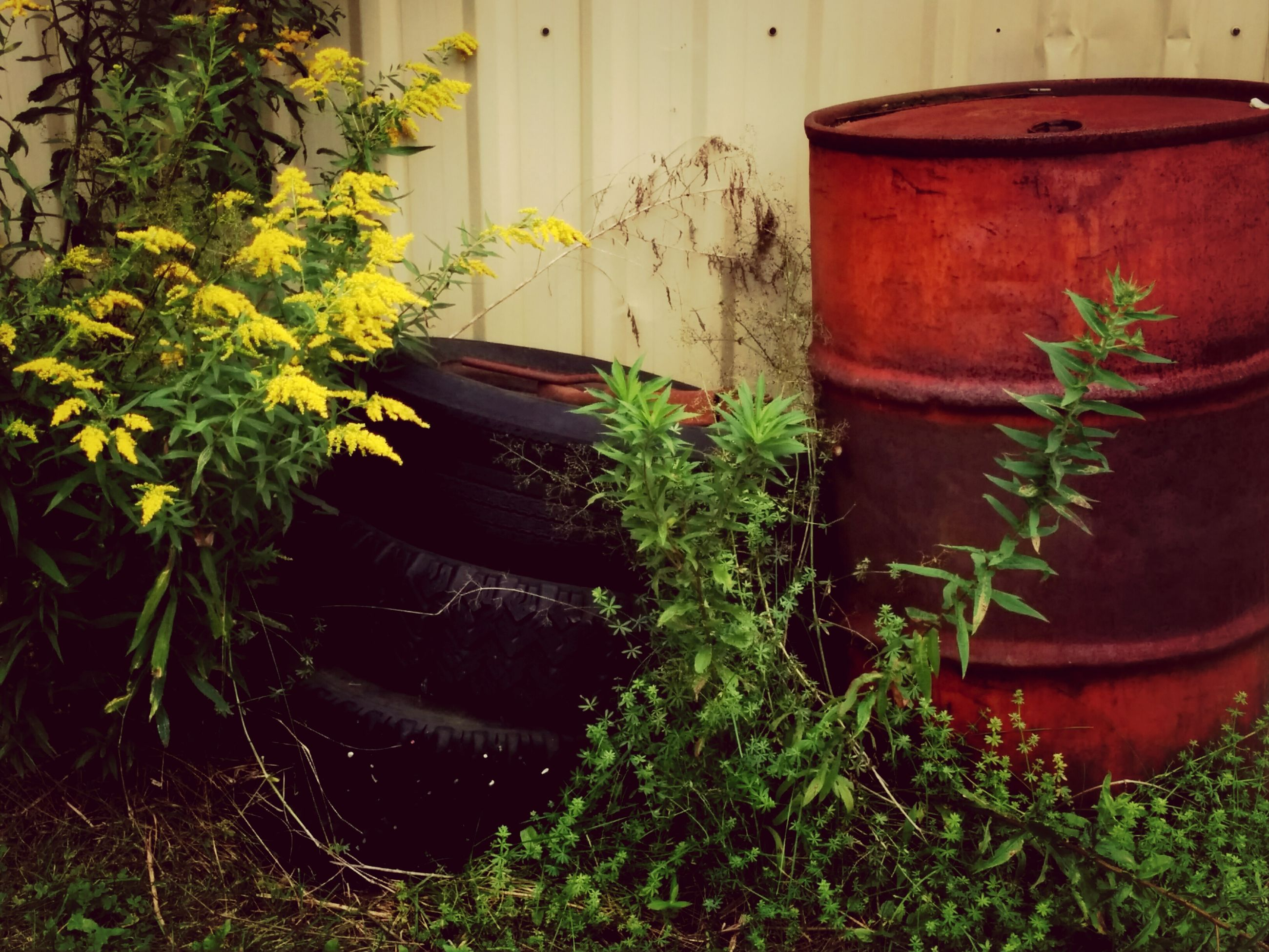 plant, growth, potted plant, built structure, building exterior, architecture, house, green color, front or back yard, leaf, outdoors, old, nature, day, no people, abandoned, flower, wall - building feature, close-up, red