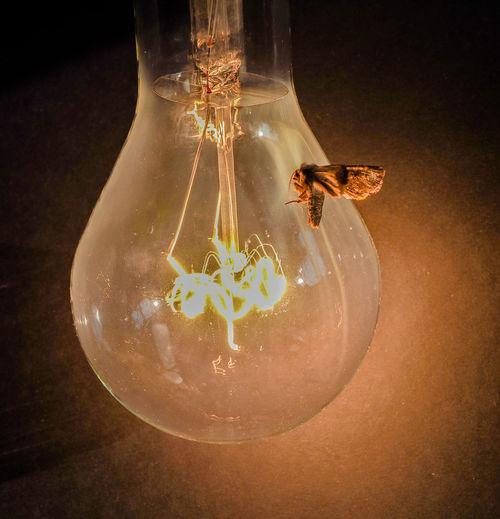 Birne, Lamp, Bulb, Elertische Lampe, Glühlampe, Lampenwendel, Wolframdraht Animal Themes Close-up Insekt, Motte, Mott, Moth Nature One Animal Pear