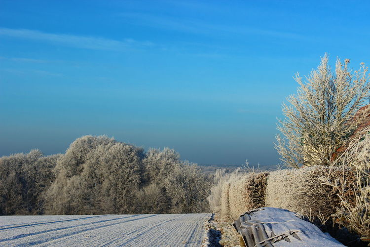Winterwonderland this morning Cold Cold Temperature Composition Farm Horizon Over Land Landscape Nature_collection Non-urban Scene Outdoors Perspective Remote Rural Scene Scenics This Is Germany Weather Winter Winterwonderland Landscapes With WhiteWall