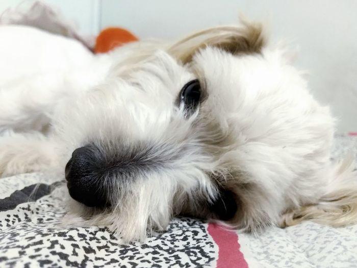 🐶🐕🦁 Pets Dog