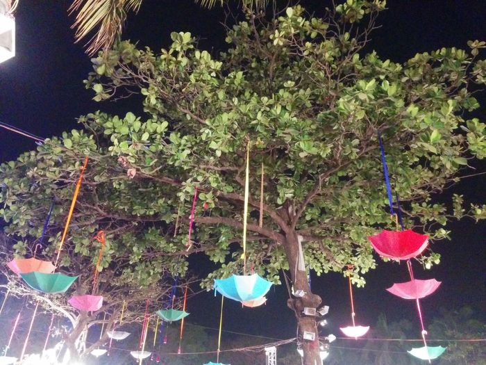 Tree No People Growth Illuminated Hanging Night Outdoors Nature Architecture Umbrellas Tied On The Trees