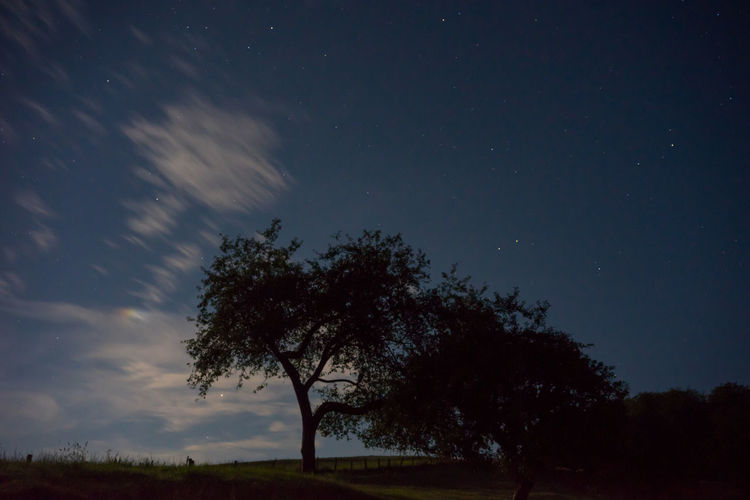 Astronomy Bare Tree Beauty In Nature Galaxy Landscape Low Angle View Nature Night No People Outdoors Scenics Silhouette Sky Star - Space Tranquil Scene Tranquility Tree