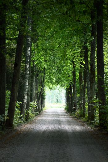 Footpath amidst trees in forest