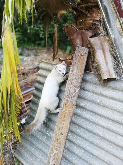 Cat Climbing Cats Animal Wood - Material Close-up Deforestation Squirrel Pile Rodent Tree Stump Lumber Industry Tree Ring Guinea Pig Timber Hamster Rat Fossil Fuel Bamboo - Plant Chipmunk Forestry Industry Log Firewood Woodpile Bamboo Grove Bamboo