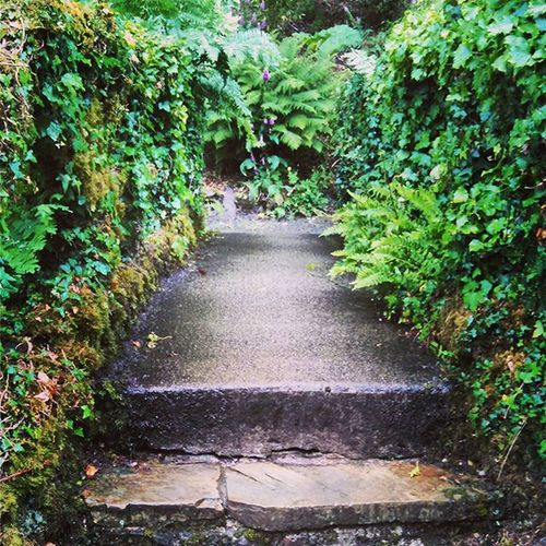 Bridgefromheretothere Simmonspark Devon