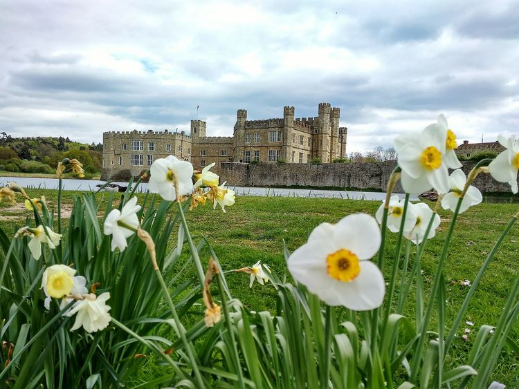 LeedsCastle Flower Growth Outdoors No People Cloud - Sky Nature Springtime Plant Fragility Freshness Day Poppy Beauty In Nature Flower Head Close-up Sky Crocus Daffodils Flowers
