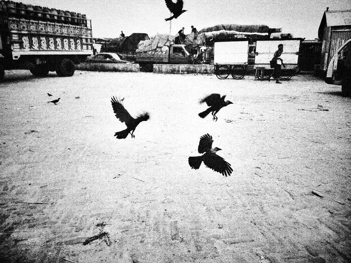 পথগ্রাফ ©D.A. | 2015