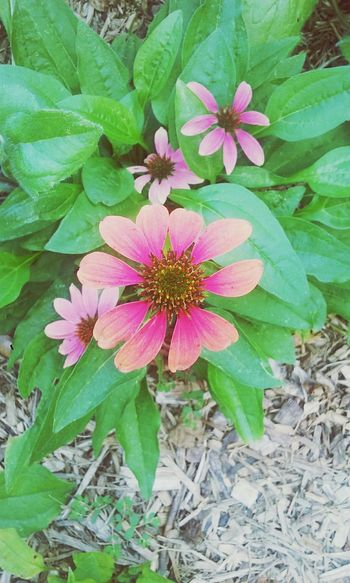 Flower Pink Garden Nj Trishann Artlovelaughter