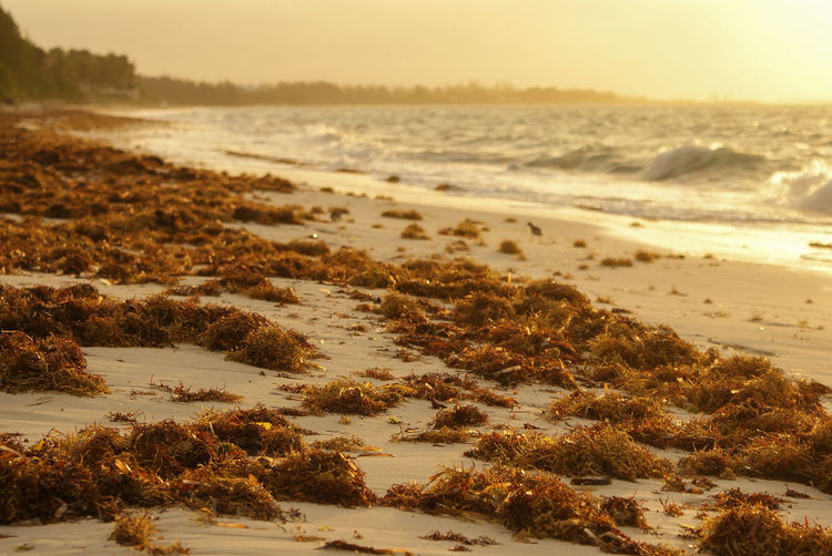 View of washed up seaweed on the beach