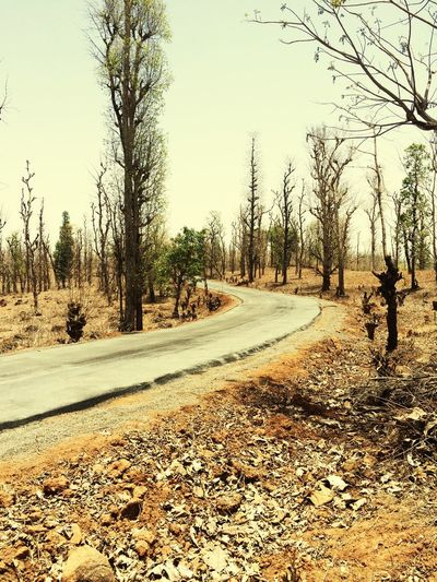 Forest road ..