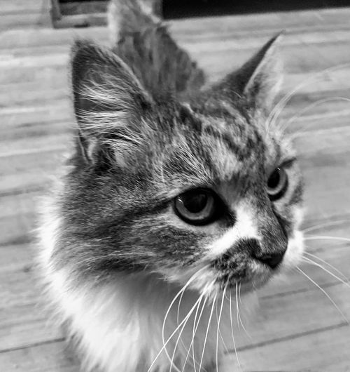 Cat Mammal Feline Animal Themes Domestic Cat Pets Domestic Animals One Animal Animal Domestic Whisker Vertebrate Close-up Looking No People Animal Body Part Looking Away Animal Head  Indoors  Focus On Foreground