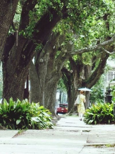 Woman Walking On The Street Scenics The Way Forward Streetphotography Streetphoto Woman With Umbrella New Orleans, LA St Charles Ave The Week On EyeEm
