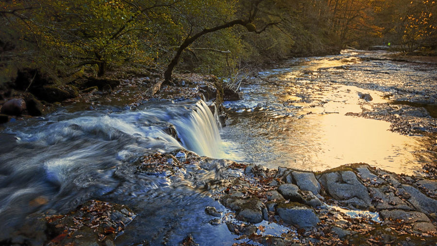 Waterfall Water Flowing Water Rock Motion Scenics - Nature Solid Tree Beauty In Nature Long Exposure Rock - Object Nature Forest Land Flowing No People Plant Day Waterfall Blurred Motion Outdoors Stream - Flowing Water Power In Nature Shallow