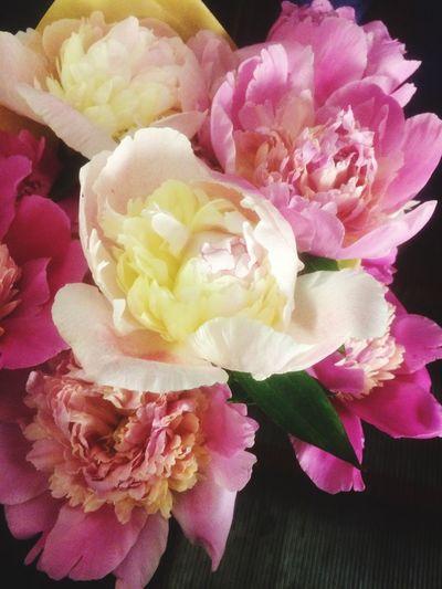 Flowering Plant Flower Freshness Petal Fragility Vulnerability  Beauty In Nature