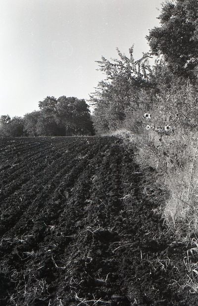 Field near Frisco, Texas in 1982 Texas Frisco Texas Fields Lost In The Landscape Black & White Friday Black And White Friday