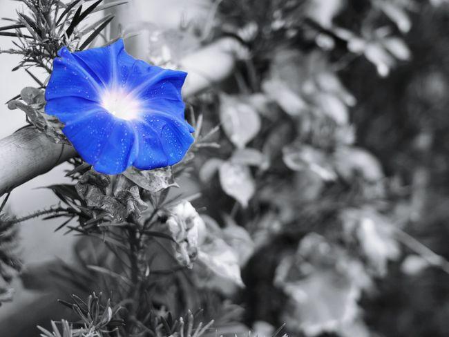 あざやかな朝を… Boke Cute Japan EyeEm Nature Lover Natural Photo Spring Flowers Flower One Color Morning