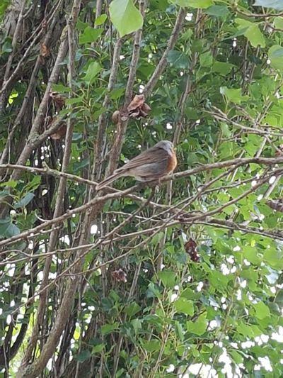 One Animal Bird Animal Wildlife