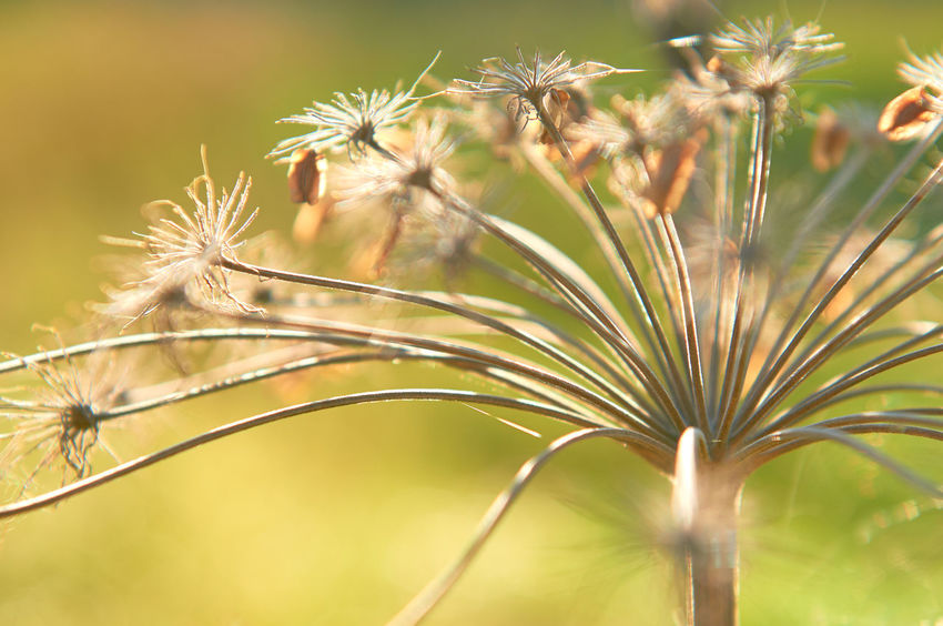 Widdum_2018_08_11246 Abstract Nature Green Brown Close-up Day Flower Focus On Foreground Lines, Shapes And Curves No People Outdoors Plant Plant Stem Selective Focus Summer Sun Light Sunlight Warm Warm Colors Yellow