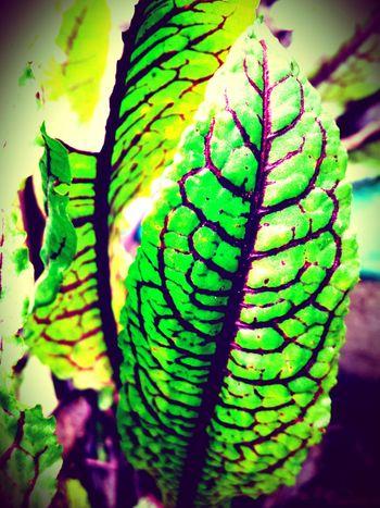 Salat Green Popular Photos Spezial Lila Tadaa Community Mint By Motorola