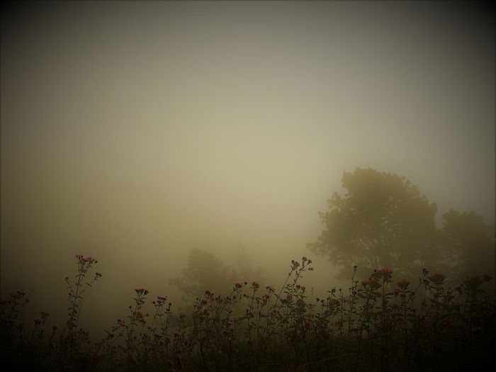 Fog Outdoors Tranquility