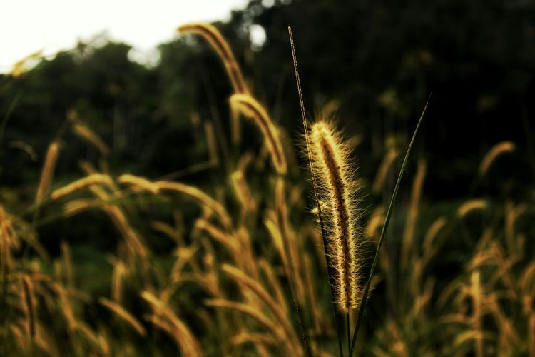 Close-Up Of Fresh Plant In Field