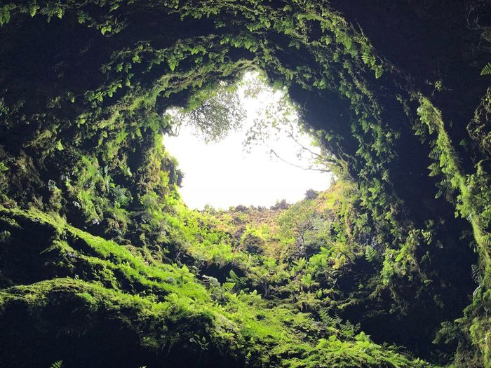 Açores Azores Terceira Terceira Island Caves Cave Plant Tree Growth Nature Green Color Sky No People Beauty In Nature Tranquility Low Angle View Outdoors Sunlight