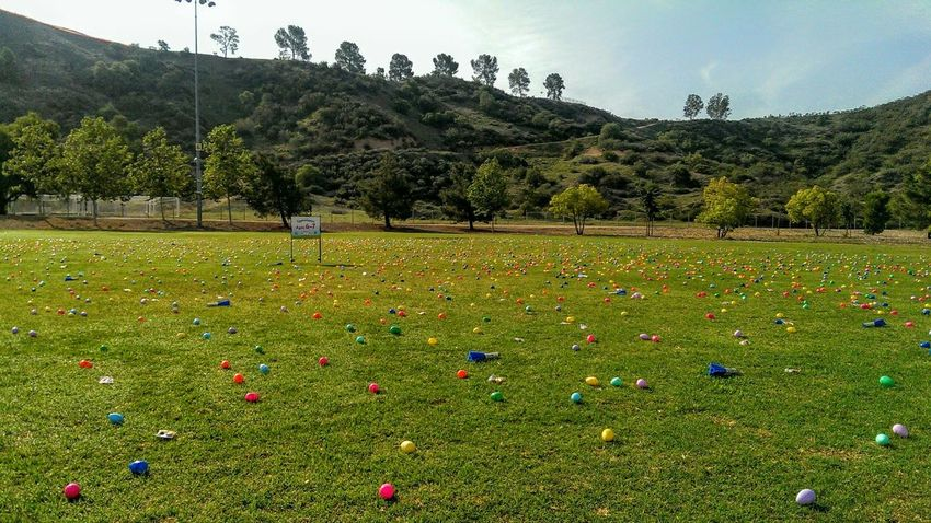 Spring Spring Time Easter Easter Ready Eggs Colors Colorful On The Ground On The Grass Fun Times Hilltop Trees And Sky Different Colors Egg Hunt Hunting Easter Eggs Easter Egg Hunt Everlasting Too Many Plastic Easter Eggs Plastic Egg