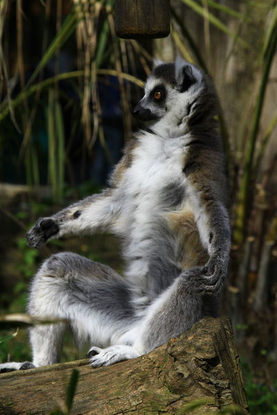 Animals Dog❤ Lovely Semplicity