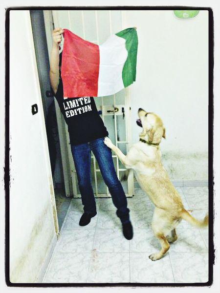 MyJoy Mydog Mondiali2014  Forza Italia