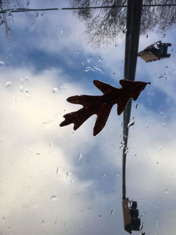 Wet leaf on the sunroof. Water No People Nature Day Sky Outdoors Leaf Clouds Rain Raindrops Streetlight Window Sunroof Upward View Weather