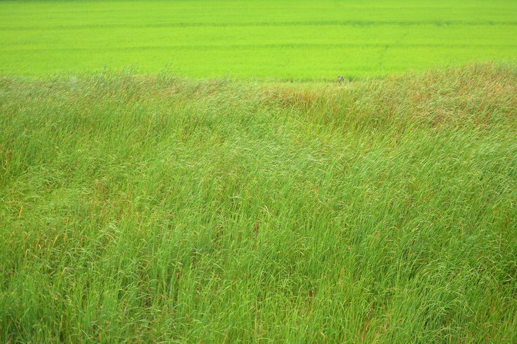 Green Color Grass Plant Field Land Landscape Growth Environment Nature Beauty In Nature Tranquility No People Rural Scene Day Scenics - Nature Tranquil Scene Agriculture Backgrounds Full Frame Outdoors