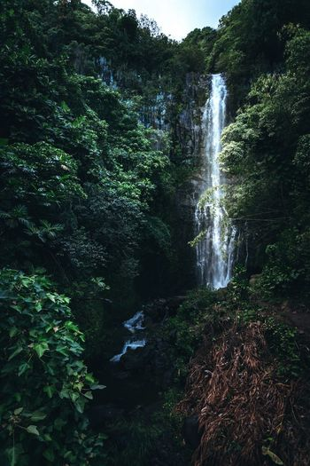 Waterfall Landscape Waterfalllovers Waterfall In Mountain Waterfall Photography West Maui Mountains Water Tree Motion Plant Waterfall Nature Forest Beauty In Nature Scenics - Nature Green Color Day Growth Splashing Flowing Water Land Outdoors No People Flowing Foliage